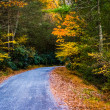 Autumn color along a road in Michaux State Forest, Pennsylvania. — Stock Photo #52575811