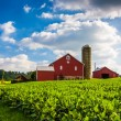 Beautiful farm field and barn on a farm near Spring Grove, Penns — Stock Photo #52576747