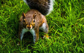 A squirrel.  — Stock Photo