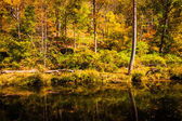 Autumn color along the Gunpowder River in Gunpowder Falls State  — Stock Photo