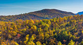Autumn colors on a mountainside in Shenandoah National Park, Vir — Stock Photo