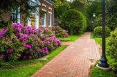 Azalea bushes and a building along a brick path at John Hopkins — Stock Photo