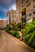 Buildings and landscaping along a street in Orlando, Florida.  — Photo