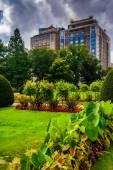 Byggnader sett från den offentliga trädgården i boston, massachusetts. — Stockfoto