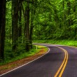 Curve along Skyline Drive in Shenandoah National Park, Virginia. — Stock Photo #52581975