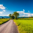 Dirt country road through farmland in the Shenandoah Valley, Vir — Stock Photo #52582649