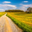 Dirt road through farm fields in rural York County, Pennsylvania — Stock Photo #52582867