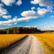 Dirt road through farm fields in rural York County, Pennsylvania — Stock Photo #52582889
