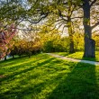 Evening light on colorful trees in Druid Hill Park, Baltimore, M — Stock Photo #52584413