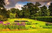 Colorful flowers in a garden at Druid Hill Park, in Baltimore, M — Stock Photo