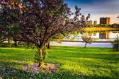 Colorful trees and view of Druid Lake in Druid Hill Park, Baltim — Foto Stock