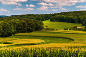 Corn fields and rolling hills in rural York County, Pennsylvania — Stock Photo