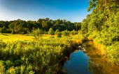 Creek and wetland area in Southern York County, Pennsylvania.  — Stock Photo