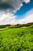 Crops growing in a farm field in rural York County, Pennsylvania — Stock Photo