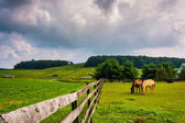 Dark clouds over horses and a fence on a farm in rural York Coun — Stock Photo
