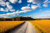 Dirt road through farm fields in rural York County, Pennsylvania — Stock Photo