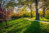 Evening light on colorful trees in Druid Hill Park, Baltimore, M — Foto Stock