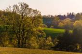 Evening light on trees and rolling hills of Southern York County — Foto Stock