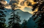 Evening view through pine trees from an overlook on Newfound Gap — Stock Photo