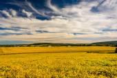 Boerderij velden en glooiende heuvels in rural york county, pennsylvania — Stockfoto