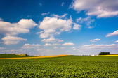 Farm fields in rural York County, Pennsylvania.  — Stock Photo
