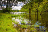 Flooding along the shore of Loch Raven Reservoir in Baltimore, M — Stock Photo