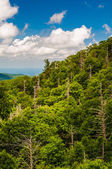Forest with many dead trees, seen from Skyline Drive in Shenando — Stock Photo