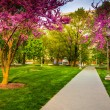 Redbud trees along a path at the Capitol Complex in Harrisburg,  — Stock Photo #52599375