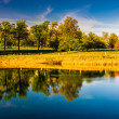 Reflections of trees in Druid Lake, at Druid Hill Park in Baltim — Stock Photo #52599613