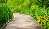 Grasses along a boardwalk trail at Patterson Park, Baltimore, Ma — Stock Photo