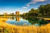 Grasses and reflections in Druid Lake, at Druid Hill Park, Balti — Stock Photo
