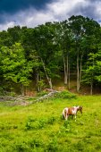 Horse in a farm field in  the rural Potomac Highlands of West Vi — Stock Photo