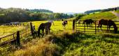 Horses and fences in a farm field in York County, Pennsylvania.  — Stock Photo