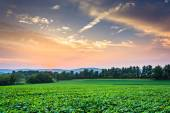 Incredible sunset sky over the Piegon Hills and farm fields, nea — Stock Photo