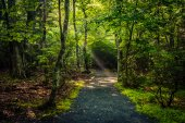 Light beams in the forest, seen on the Limberlost Trail in Shena — Stock Photo
