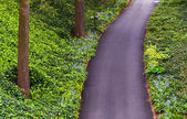 Looking down at a woodland path in Longwood Gardens, Pennsylvani — Stock Photo
