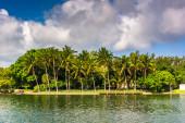 Пальмовые деревья вдоль канала Коллинз, в Майами-Бич, Флорида. — Стоковое фото