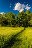Path through grassy field at Antietam National Battlefield, Mary — Stock Photo