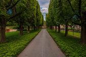 Camino a través de los árboles en longwood gardens, pennsylvania. — Foto de Stock
