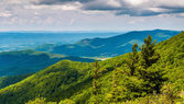 Pine trees and overlook of the Blue Ridge Mountains in Shenandoa — Stock Photo