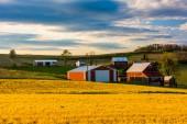 Red barns on a farm in rural York County, Pennsylvania.  — Stock Photo