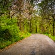 Spring color along a road through a forest in Lancaster County C — Stock Photo #52601401