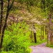 Spring color along a road through a forest in Lancaster County C — Stock Photo #52601423