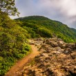 The Appalachian Trail on Little Stony Man Cliffs in Shenandoah N — Stock Photo #52606403