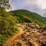 谢南多厄 n 中的小石头人悬崖上的阿巴拉契亚小径 — 图库照片 #52606403