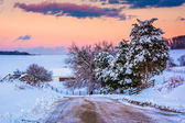 Snow covered pine trees and fields along a dirt road in rural Yo — Stock Photo