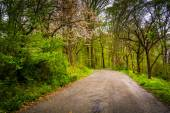 Spring color along a road through a forest in Lancaster County C — Stock Photo