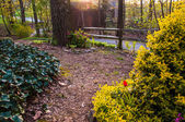 Spring garden scene under evening light — Stock Photo
