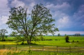 Storm clouds over a tree in a field, Gettysburg, Pennsylvania. — Stock Photo