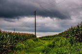 Storm clouds over corn fields and utility poles in rural York Co — ストック写真